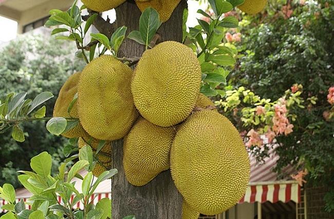 Tả cây ăn quả mà em yêu thích
