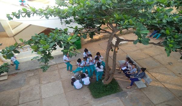 Tả cây bàng ở sân trường em lớp 5