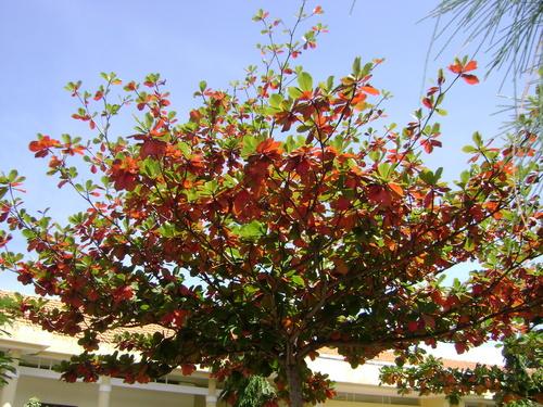 Tả cây bàng theo 4 mùa mà em đã quan sát được
