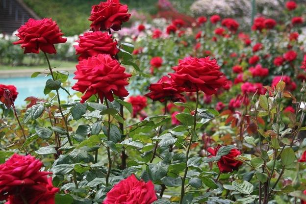 Tả cây hoa mà em yêu thích