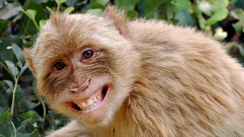 Tả con khỉ mà em đã từng nhìn thấy