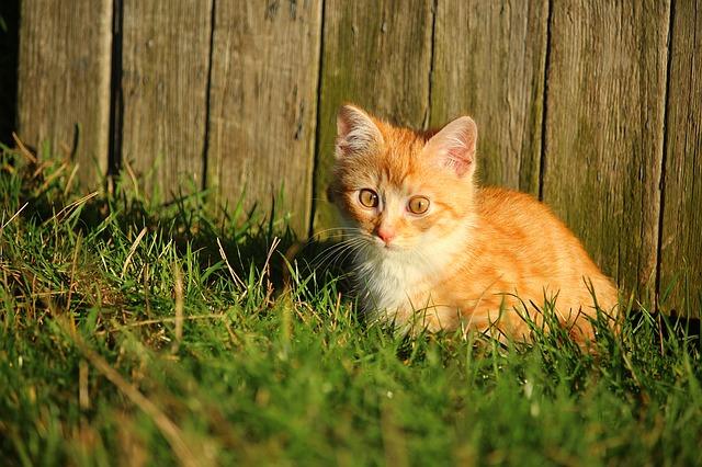 ta con meo lop 2 - Tả con mèo mà em yêu thích lớp 2