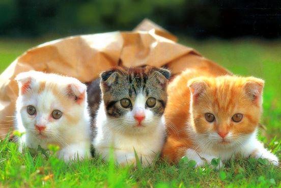ta con meo - Tả con mèo nuôi nhà em