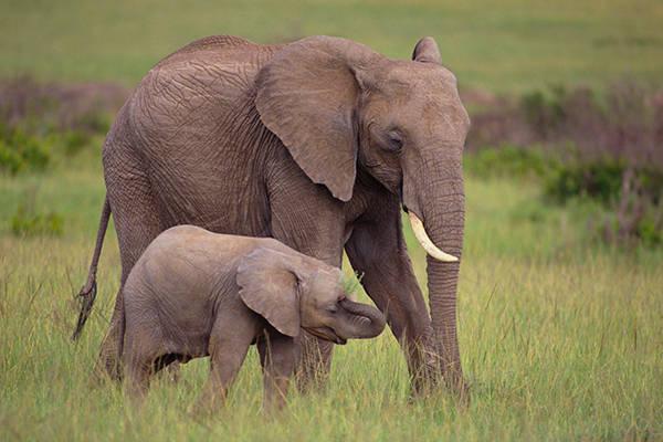 Tả con voi ở trong vườn bách thú
