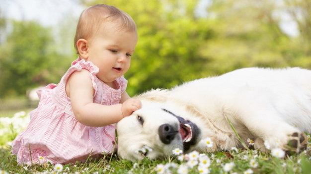 Hãy kể về một kỉ niệm đáng nhớ với con vật nuôi mà em yêu thích – Bài tập làm văn số 2 lớp 8