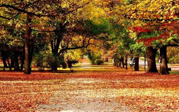 Tả cảnh mùa thu mà em yêu thích