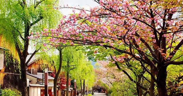 Tả cảnh mùa xuân trên quê hương em