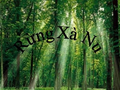 Phân tích hình tượng rừng xà nu trong tác phẩm cùng tên của Nguyễn Trung Thành