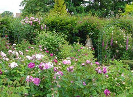 Từ bài Lao Xao của Duy Khán, em hãy tả lại khu vườn trong một buổi sáng đẹp trời – Bài tập làm văn số 7 lớp 6
